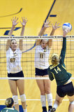 Voleibol do NCAA 2014 - Baylor - WVU Foto de Stock