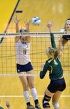 Voleibol do NCAA 2014 - Baylor - WVU Imagem de Stock