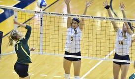 Voleibol do NCAA 2014 - Baylor - WVU Imagem de Stock Royalty Free