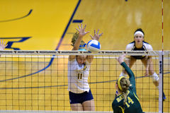Voleibol do NCAA 2014 - Baylor - WVU Imagem de Stock Royalty Free