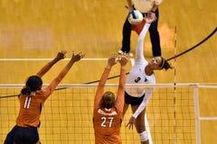 2015 voleibol do NCAA - Texas @ West Virginia Fotografia de Stock