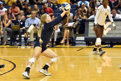 2015 voleibol do NCAA - Texas @ West Virginia Foto de Stock Royalty Free