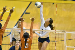 2015 voleibol do NCAA - Texas @ WVU Fotografia de Stock Royalty Free