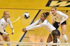 2015 voleibol do NCAA - Texas @ WVU Fotos de Stock Royalty Free