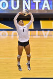 2015 voleibol do NCAA - Texas @ WVU Fotografia de Stock