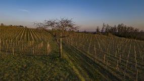 Voler au-dessus d'un vignoble dans un jour d'hiver photographie stock