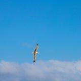 Voler au-dessus de l'océan Photo libre de droits