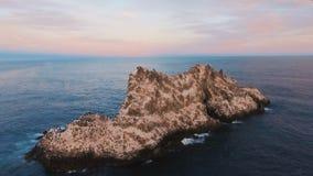 Voler au-dessus de la falaise dans la mer Oiseaux sur une roche en mer Île avec des oiseaux dans l'océan banque de vidéos