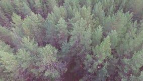Voler au-dessus de la forêt banque de vidéos