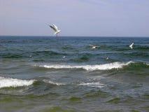 Voler au-dessus de la mer Photo libre de droits