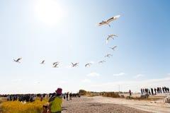Voler d'oiseaux photo libre de droits
