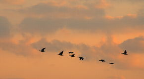 Voler d'oiseaux Images libres de droits