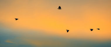 Voler d'oiseaux images stock