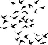 Voler d'oiseaux migrateurs dessiné dedans Photos stock