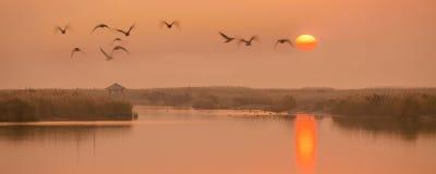 Voler dans le coucher du soleil image stock