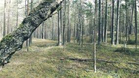 Voler dans les bois entre les arbres banque de vidéos