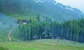 Voler de colombes image libre de droits