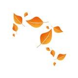 Voler de feuilles Photo stock
