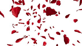 Voler de pétales de rose illustration libre de droits