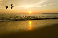 Voler de silhouettes d'oiseaux Photo libre de droits