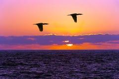 Voler de silhouettes d'oiseaux Images stock