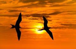 Voler de silhouettes d'oiseaux Photographie stock