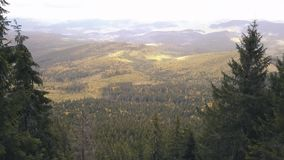 Voler sur le bourdon par la forêt sauvage en montagnes carpathiennes clips vidéos
