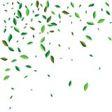 Voler vert ou tomber part Fond abstrait de feuillage de vecteur illustration stock