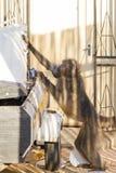 Voleur de tabac de babouin photo stock