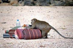 Voleur thaï de singe image stock