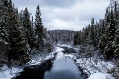 Volez la crique bleue et la forêt inter photo libre de droits
