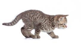 Volez le chat d'isolement images stock