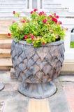 Volez le pot pipal de texture de feuille avec la fleur de bougainvillée images libres de droits