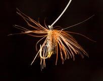 Volez pour pêcher des poissons sur un fond noir Photographie stock