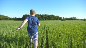Volg aan gelukkige jongen doorneemt het gebied met groene tarwe bij een zonnige hete dag Onbezorgd kind in hoedenjogging bij stock videobeelden