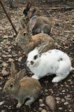 volg het witte konijn Stock Foto's