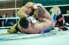 Volga Federal District Championship in mixed martial arts Royalty Free Stock Images