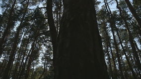 Volgend schot in een dikke vergankelijk boszon die door boom glimmen Bos met zonnestralen het glanzen Het licht van zonstralen stock videobeelden