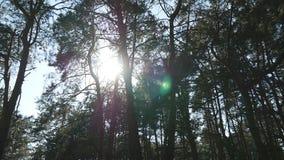 Volgend schot in een dikke vergankelijk boszon die door boom glimmen Bos met zonnestralen het glanzen Het licht van zonstralen stock video