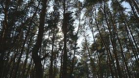 Volgend schot in een dikke vergankelijk boszon die door boom glimmen Bos met zonnestralen het glanzen Het licht van zonstralen stock footage