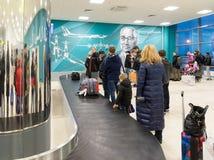Volgograd Ryssland - Oktober 31 2016 Passagerare väntar på bagaget runt om bagagekarusell i C som är terminalan av Aeroport Royaltyfri Bild