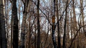 Volière dans la forêt d'hiver Image libre de droits