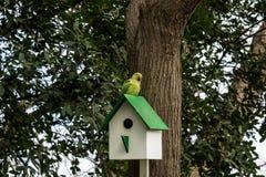 Volière en bois, pondoir sur un arbre avec le perroquet images libres de droits