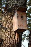 Volière en bois sur l'arbre Photographie stock libre de droits