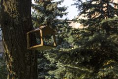 Volière en bois sur une branche d'arbre Photos stock