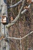 Volière faite de bois Photographie stock