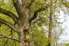 Volière pour des oiseaux sur l'arbre Photos stock