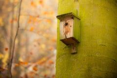 Volière sur l'arbre dans la forêt photo stock