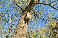 Volière sur l'arbre dans le verger de printemps Image stock
