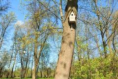 Volière sur l'arbre dans le verger tôt de ressort Images libres de droits